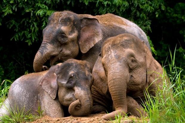 nesli-tukenmekte-olan-hayvanlar-7